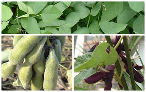 Bài học quý từ phát triển nông nghiệp ở Nhật Bản, Trung Quốc