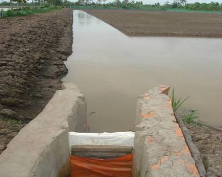 """""""Giải mặn, tích ngọt"""" khi nuôi tôm trong ruộng lúa nhằm thích ứng với biến đổi khí hậu"""