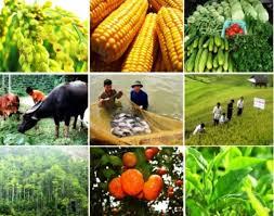 Thủ tướng gỡ nút thắt cho nông nghiệp