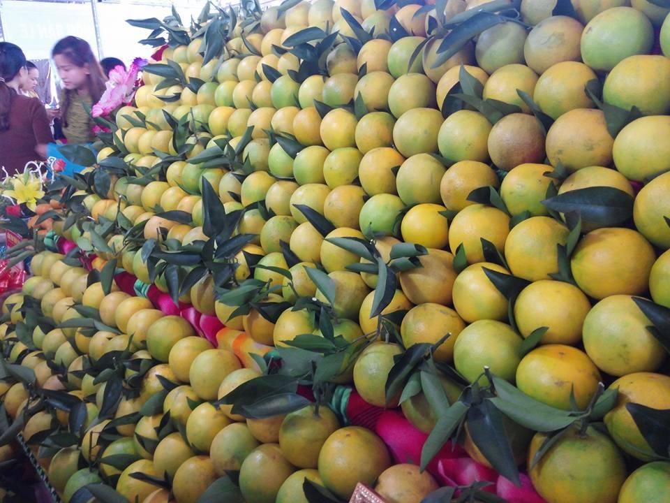 Nông nghiệp 2016, vượt thách thức, duy trì tăng trưởng