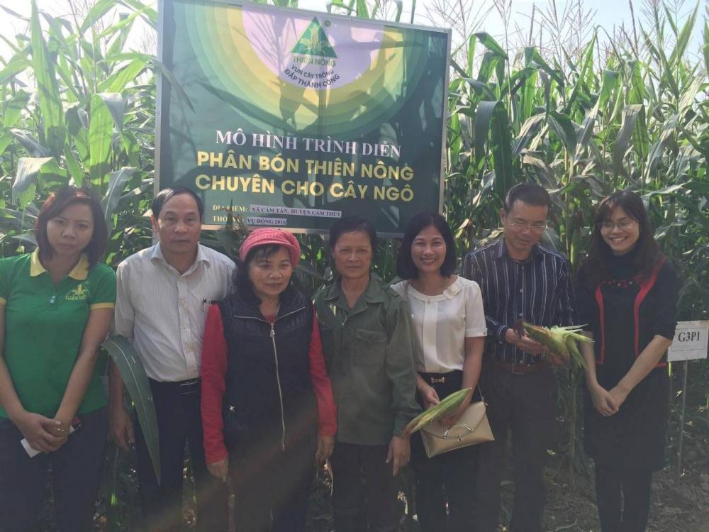 Mô hình trình diễn phân bón Thiên Nông chuyên cho cây Ngô tại Huyện Cẩm Thủy