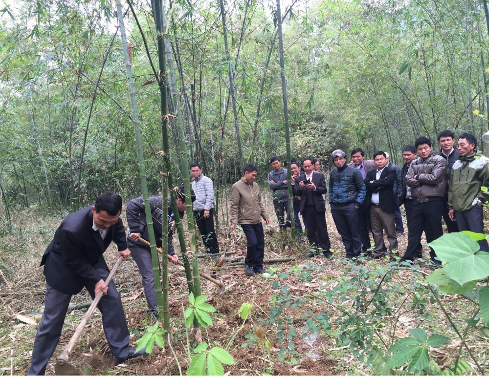Công ty Thiên Nông tập huấn kỹ thuật bón phân chuyên cho cây tre luồng