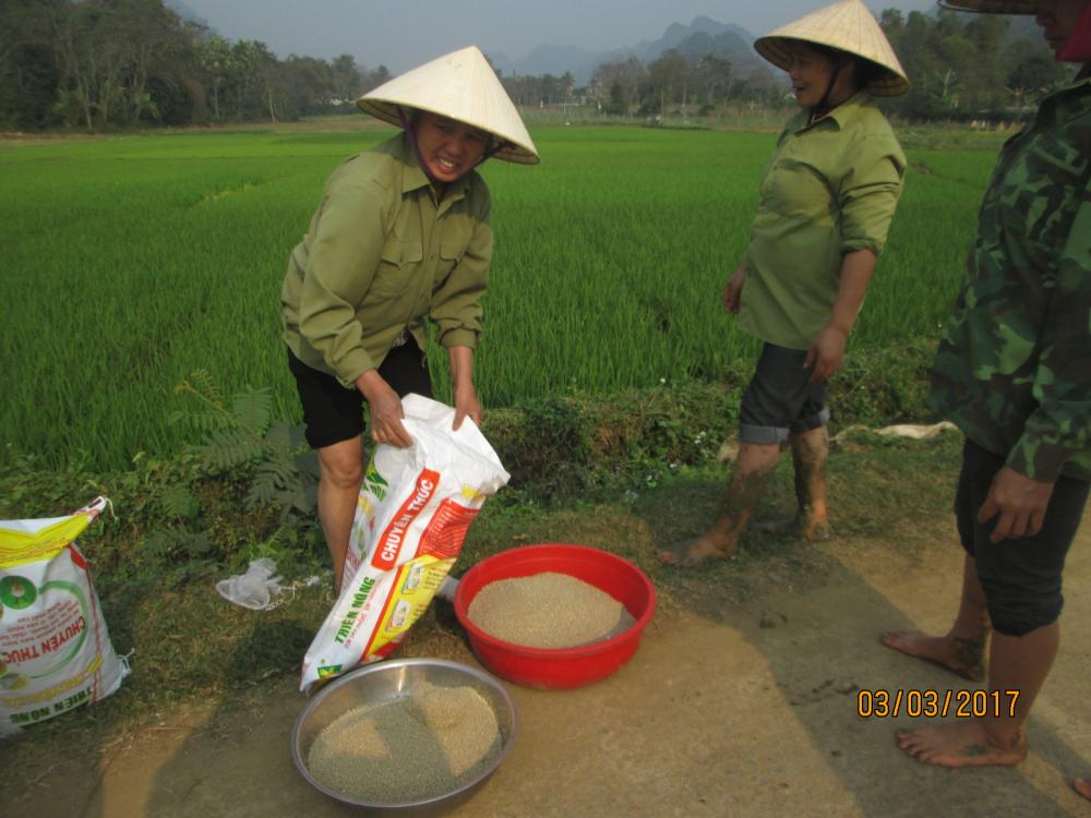 Mô hình trình diễn phan bón Thiên Nông chuyên dùng cho cây lúa tại Thanh Hóa
