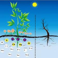 Quá trình hấp thụ và vận chuyển khoáng trong cây trồng
