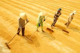 Tạo ra cuộc cách mạng về chất cho hạt gạo Việt