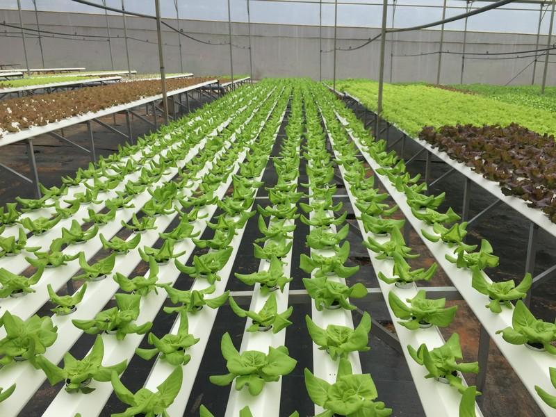Mô hình nông nghiệp 4.0 và khả năng áp dụng ở Việt Nam: Nông nghiệp 4.0 là gì?