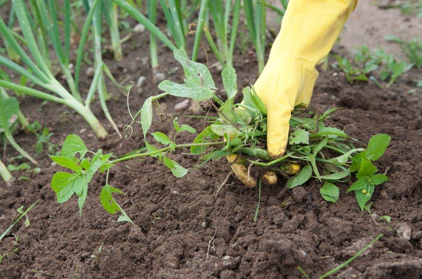 Phương pháp kiểm soát cỏ dại tiết kiệm và bảo vệ đất