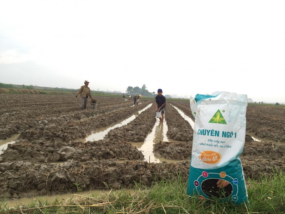 Thiên Nông – Hướng dẫn kỹ thuật gieo trồng ngô đầu vụ đông 2017-2018