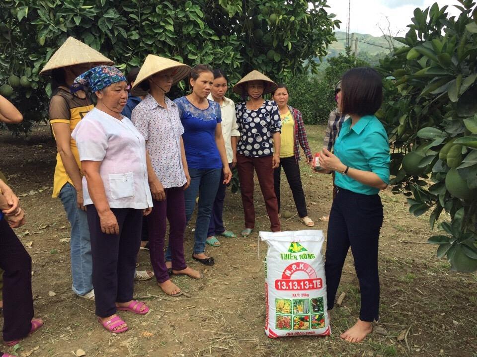 Hướng dẫn các biện pháp chăm sóc vườn  cây có múi sau thu hoạch