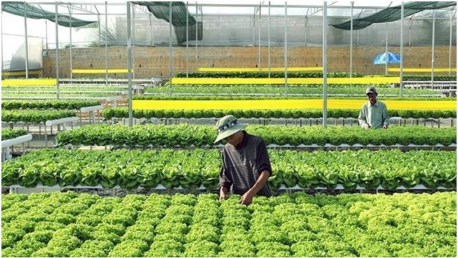 Để nông sản xuất khẩu tiến nhanh hơn, bền vững hơn