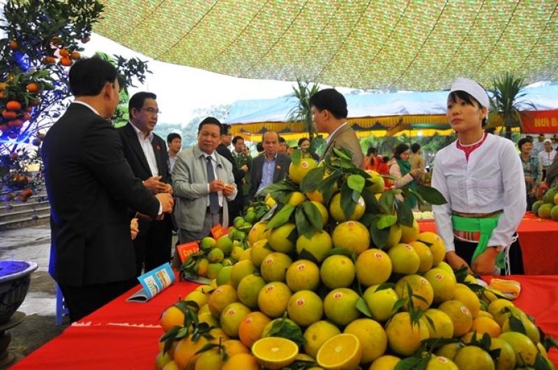 Phát triển cây ăn quả có múi ở các tỉnh miền núi phía Bắc: Nhất thiết phải liên kết sản xuất