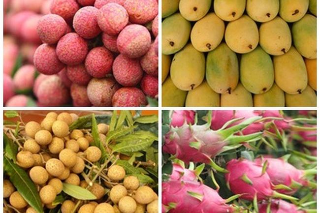 Xuất khẩu quả - rau - hoa là cơ hội và một giải pháp thoát nghèo cho khu vực nông thôn, miền núi