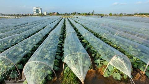 Biện pháp phòng chống rét cho cây trồng