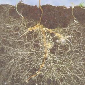 Phát hiện ra bộ gen về sự cộng sinh giữa nấm và thực vật