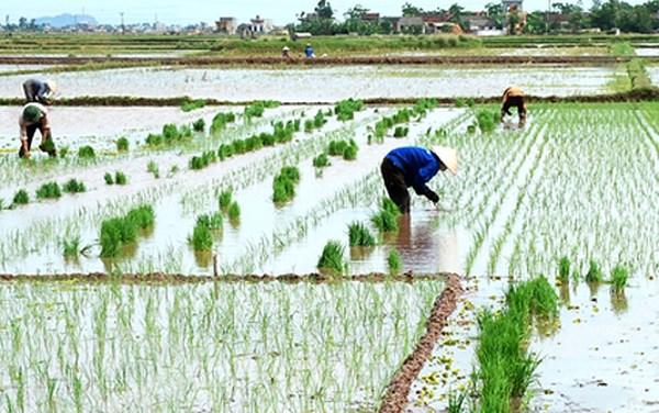 Cả nước tập trung sản xuất vụ Đông Xuân
