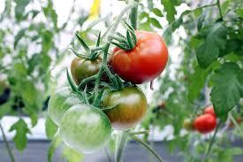 Cần thay đổi tư duy sản xuất và tiêu thụ nông sản trong cách mạng 4.0
