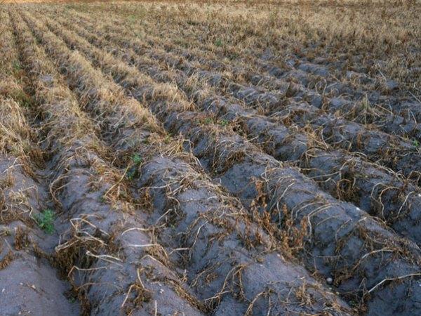 Điều chỉnh gien để bù nước cho cây sau hạn hán