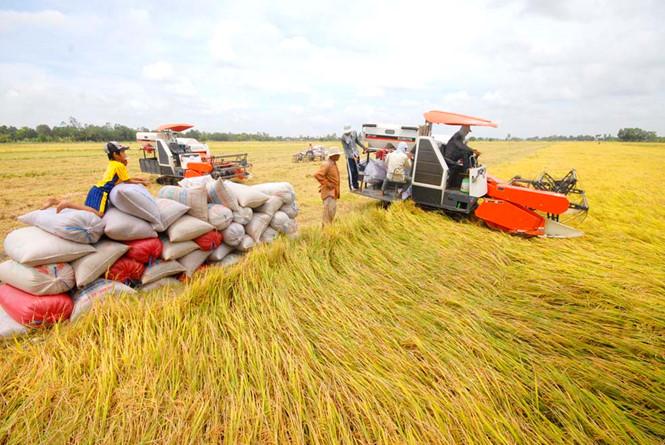 Tái cơ cấu nông nghiệp: Nhìn từ hai ngành chủ lực
