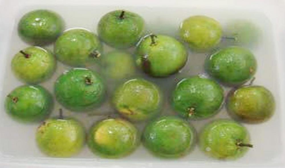 Một số tiến bộ kỹ thuật bảo quản sản phẩm cây ăn quả có múi sau thu hoạch