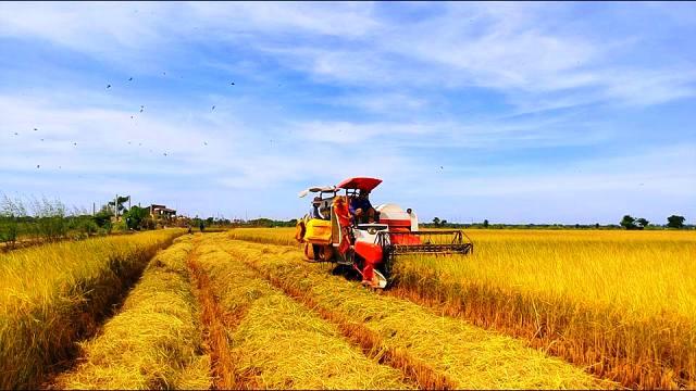 Năm 2019, ngành nông nghiệp phấn đấu xuất khẩu tối thiểu 43 tỷ USD