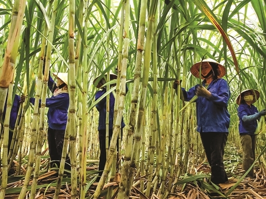 Bộ trưởng Nguyễn Xuân Cường: Ngành mía đường cần giảm giá thành ở tất cả các khâu