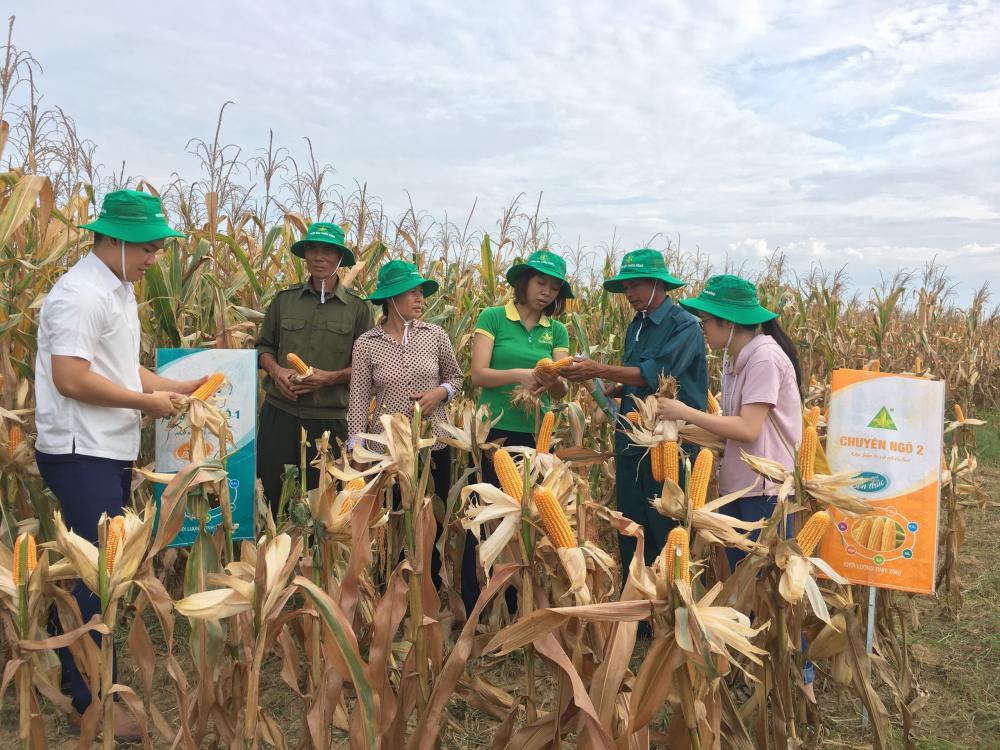 Hội thảo đầu bờ Mô hình trình diễn phân bón NPK Thiên Nông có chứa các chất dinh dưỡng trung, vi lượng (Ca, Mg, S, Mo, Bo) cho cây ngô tại xã Hoằng Giang, huyện Hoằng Hóa