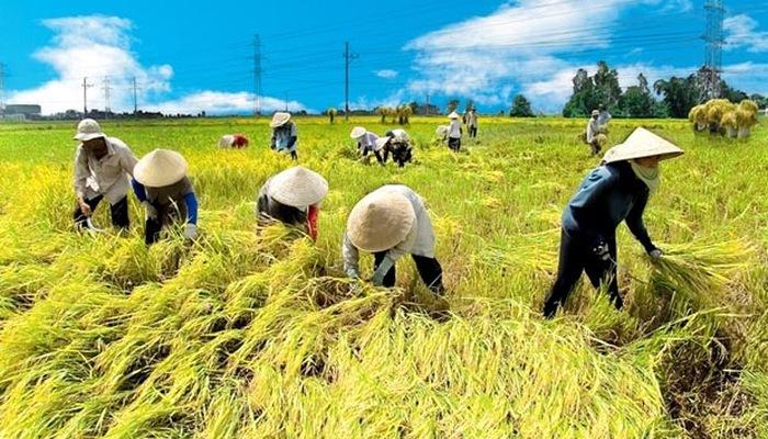 6 tháng đầu năm 2019: ngành nông nghiệp đối mặt nhiều khó khăn