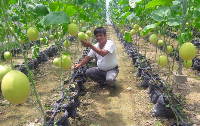 Thanh Hóa: Tổng sản phẩm nông nghiệp 6 tháng tăng trên 1,6%